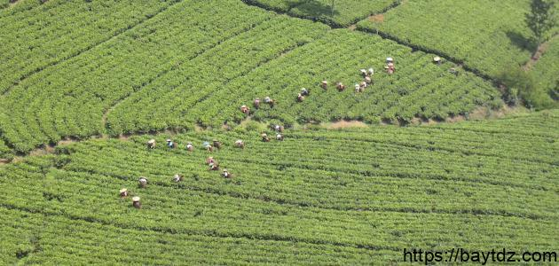 مفهوم الزراعة المعاشية