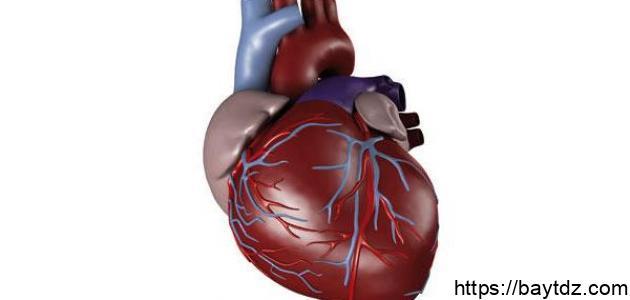 مقال علمي عن القلب