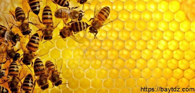 مقالة علمية عن النحل