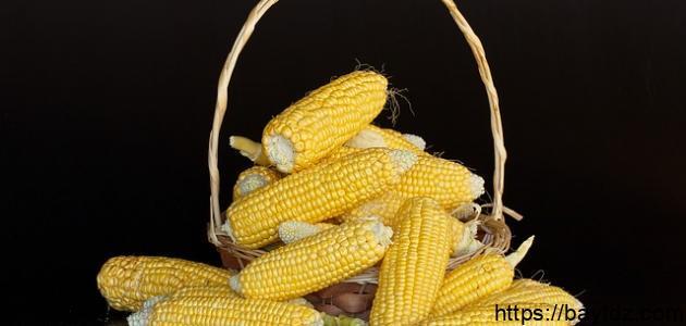 مكونات نبات الذرة