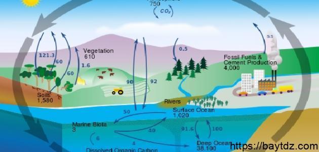ملخص قصير عن دورة الكربون