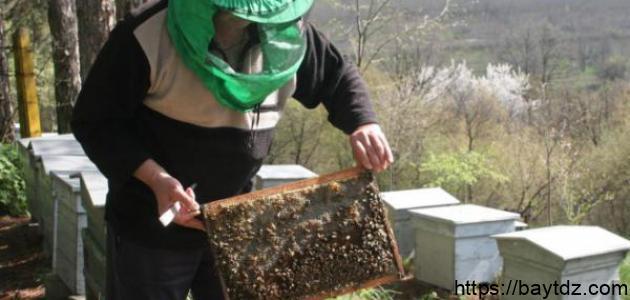 مم تتكون خلية النحل