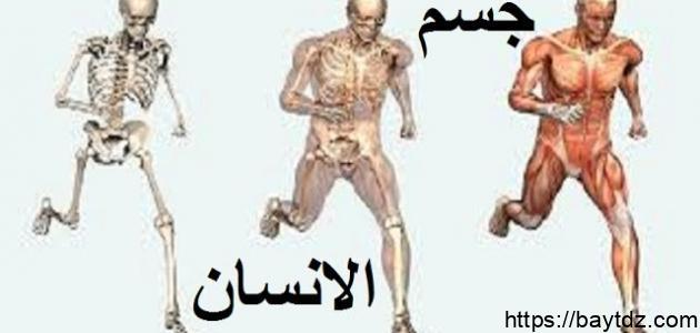 مما يتكون جسم الإنسان