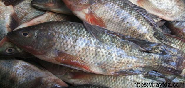 من أنواع الأسماك