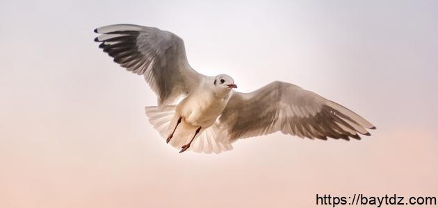 من خصائص الطيور