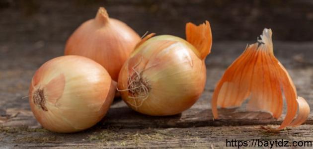موعد زراعة البصل