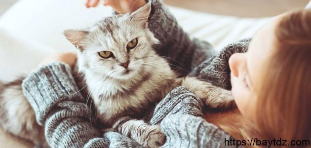 هل داء القطط معدٍ