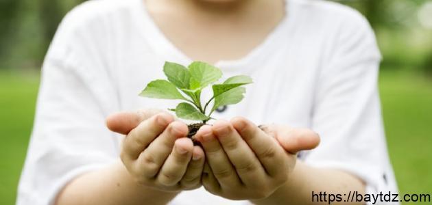 وسائل المحافظة على البيئة في الإسلام