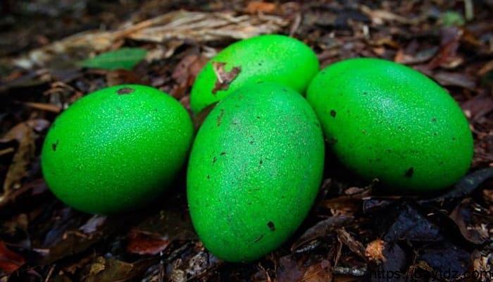 8 أنواع طيور تضع بيض ملون طبيعي