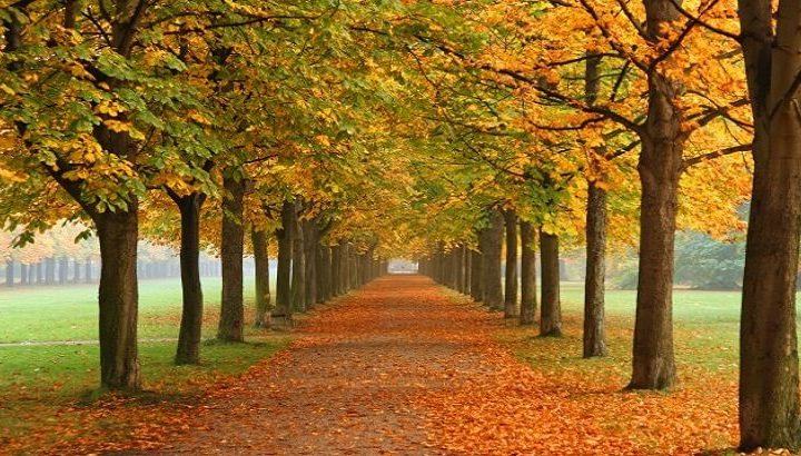 اذاعة مدرسية عن فصل الخريف