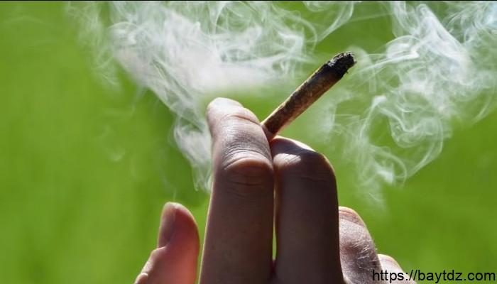 العلاقة بين تدخين الماريجوانا وسرطان الخصية