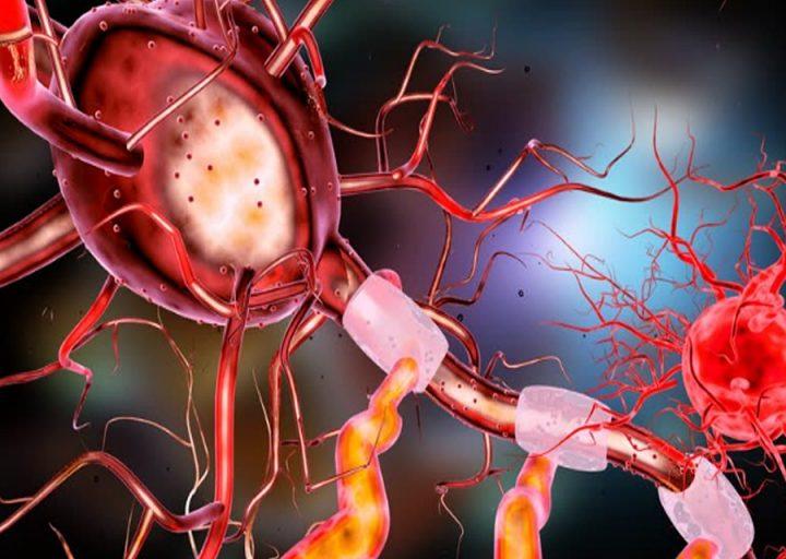 الفرق بين الجهاز السمبثاوي والجار سمبثاوي