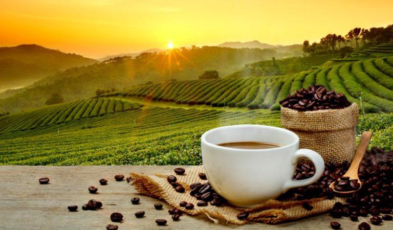 الفرق بين القهوه البريه والهرريه