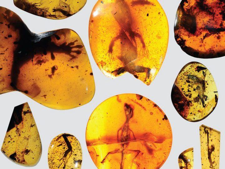 انواع حجر الكهرمان