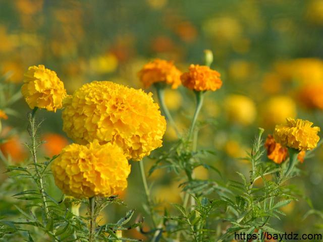 بحث عن النباتات الزهرية