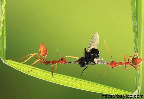 تعبير عن التعاون بين النمل