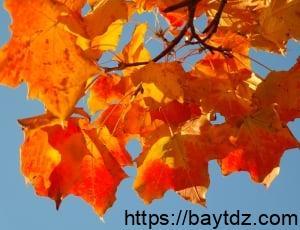 تفسير اللون البرتقالي في المنام
