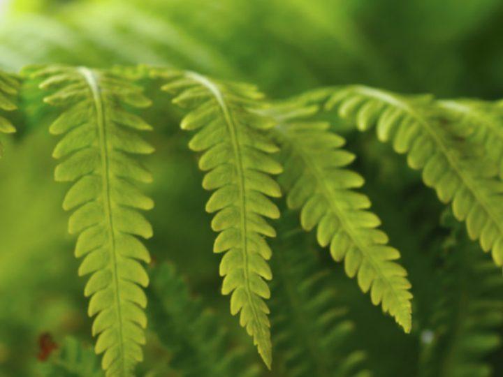 تكاثر النباتات بالاقلام