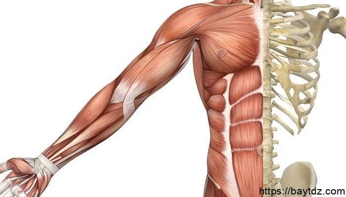 كم عدد العضلات في الجسم البشري ؟