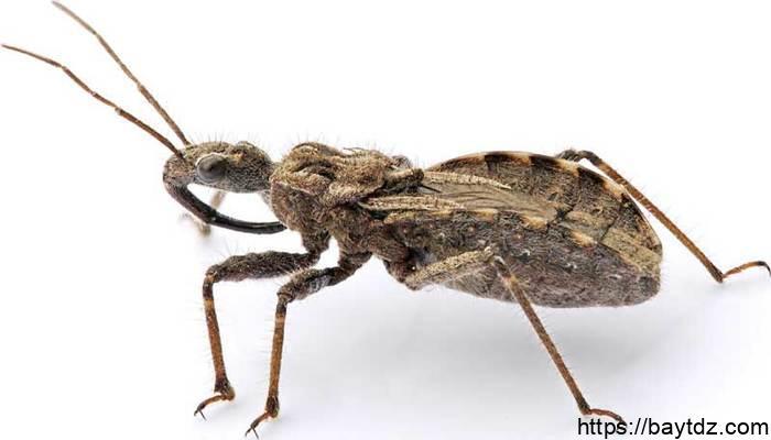 ما أصغر حشرات في العالم