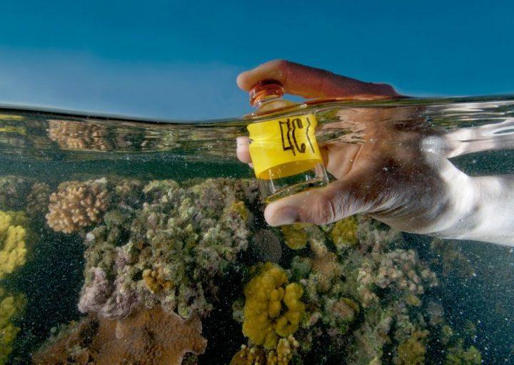 ما هو تحمض المحيطات