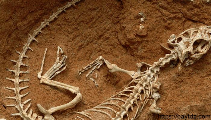 ما هو علم الحفريات