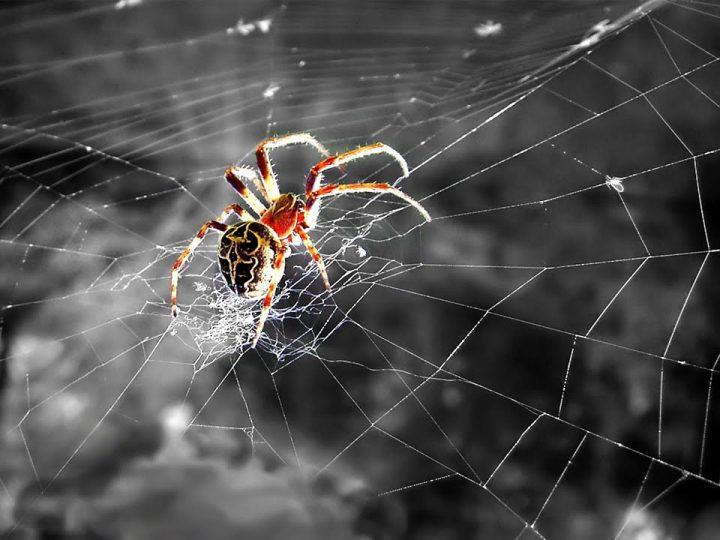 ماذا يعني مشاهدة خيوط العنكبوت في المنام