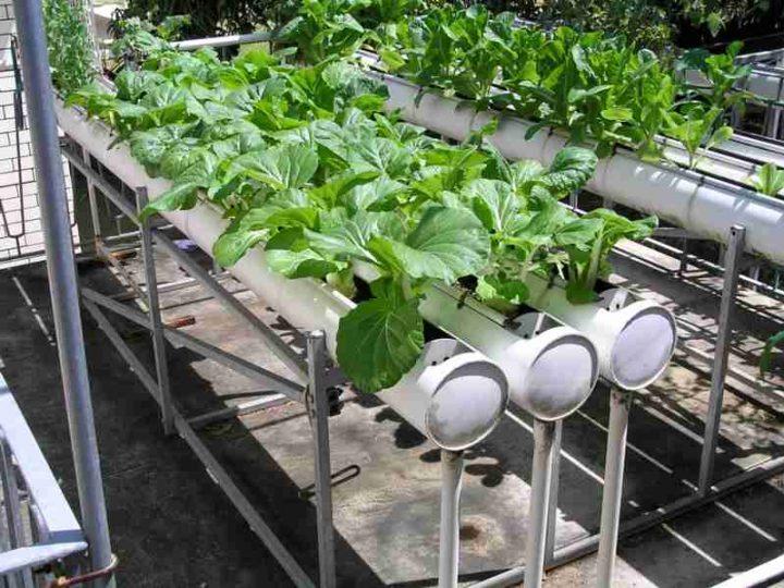 معلومات عن نظام الهيدروبونيك في الزراعة