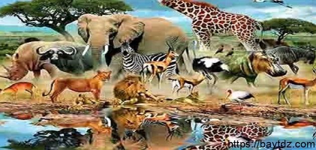 معلومات غريبة عن الحيوانات