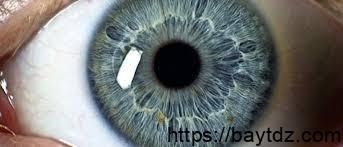 من هو أول من شرح تركيب العين