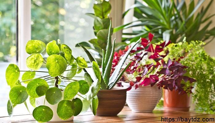 هل تعلم عن النباتات للاذاعة المدرسية