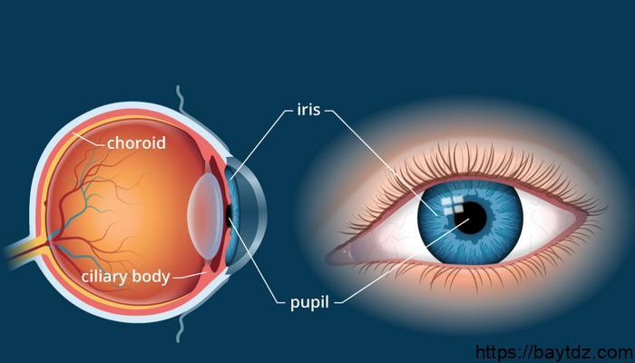 وظيفة الجسم الهدبي في العين