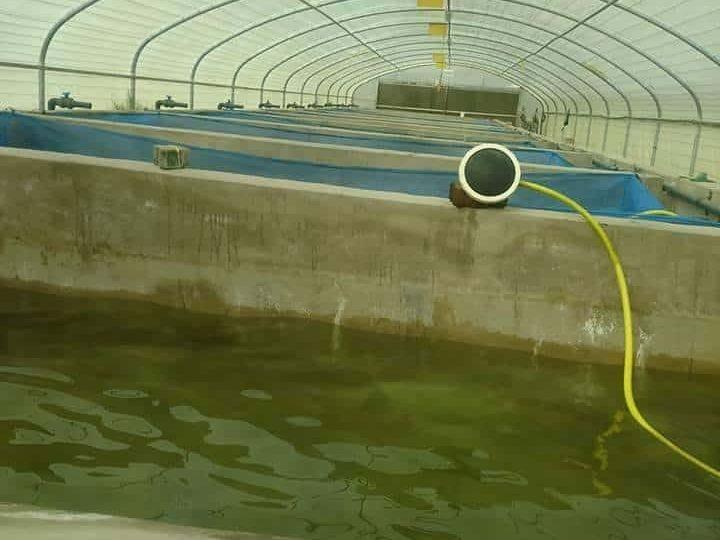 دراسة جدوى مزرعة اسماك (يغطي تكاليفة في ٥ اشهر فقط)